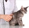 Ветеринарные клиники в Кангалассах